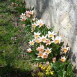 Blumen an einer der Gartenmauern (© Haus St. Benedikt, Pater Mag. Siegfried Stattmann OSB).