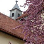 Blühende Bäume ... (© Haus St. Benedikt, Pater Mag. Siegfried Stattmann OSB)